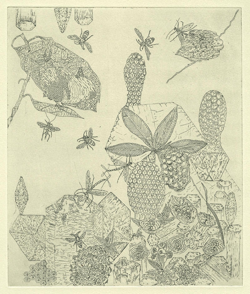 Hexagonal Form Copper Etching: Drawn from the National History Museum, London, 2013